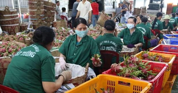 Provincia vietnamita Tien Giang apunta incrementar exportaciones en 2021 hinh anh 1