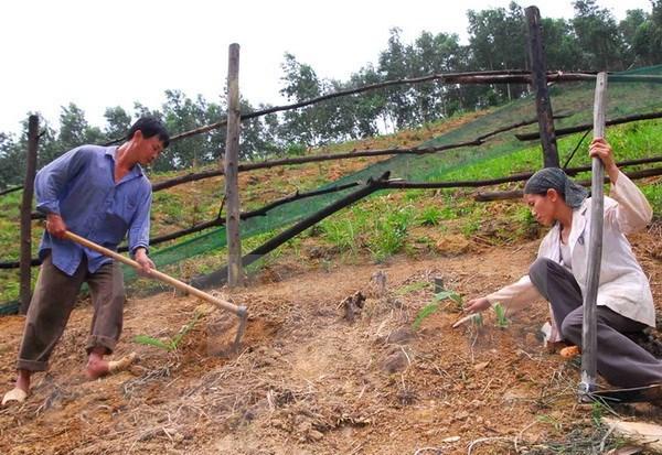 Provincia vietnamita aumenta inversiones en proyectos de control de erosion hinh anh 1