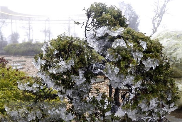 Suspenden clases en localidades montanosas de Vietnam por frio severo hinh anh 1