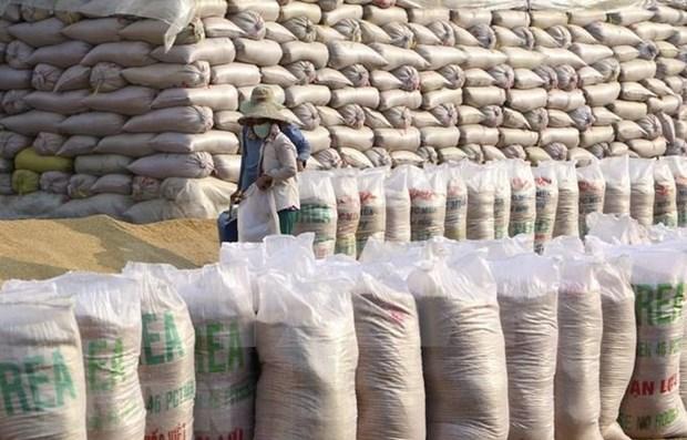 Filipinas importara 1,7 millones de toneladas de arroz en 2021 hinh anh 1