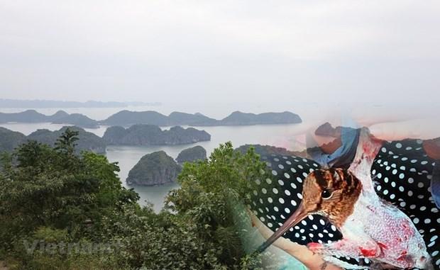 Vietnam por fortalecer la gestion de aves silvestres migratorias hinh anh 1