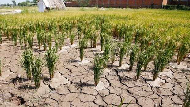 Camboya completa NDC actualizada de convencion sobre cambio climatico hinh anh 1