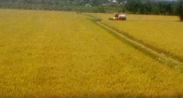 Provincia vietnamita de Long An ampliara modelos de proteccion ambiental hinh anh 1
