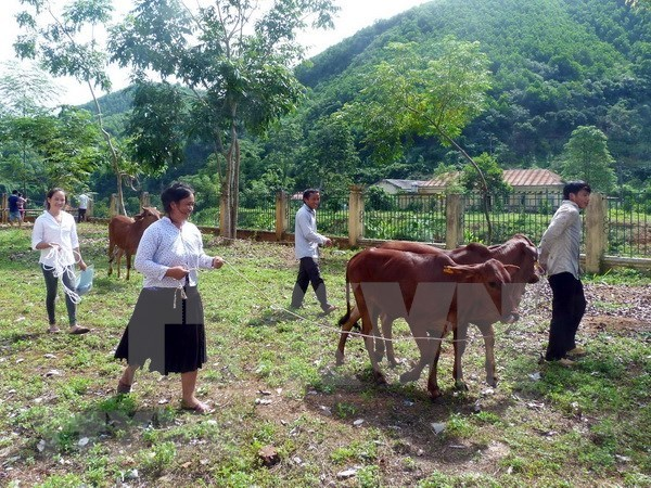 Cruz Roja de Vietnam recaudara fondo a pobres a traves de programa humanitario hinh anh 1