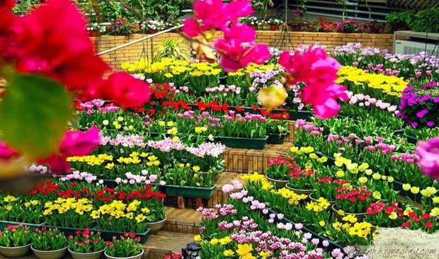 Quang Binh acogera Festival Internacional de Flores en 2023 hinh anh 1