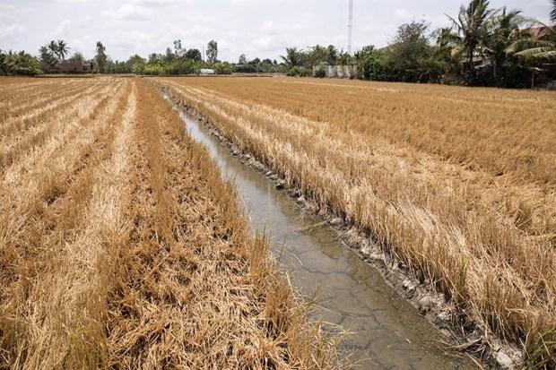 Delta del rio Mekong enfrentara riesgo de intrusion salina durante el Tet hinh anh 1