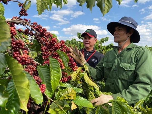 Exportacion agrosilvicola y acuicola de Vietnam supera los tres mil millones de dolares en enero hinh anh 1