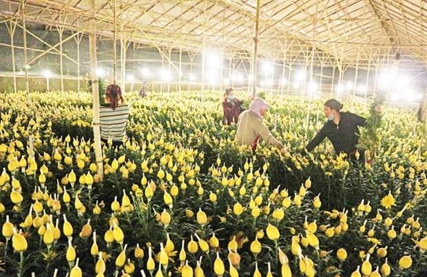 Cultivadores de flores vietnamitas buscan ventas en linea en medio del COVID-19 hinh anh 1