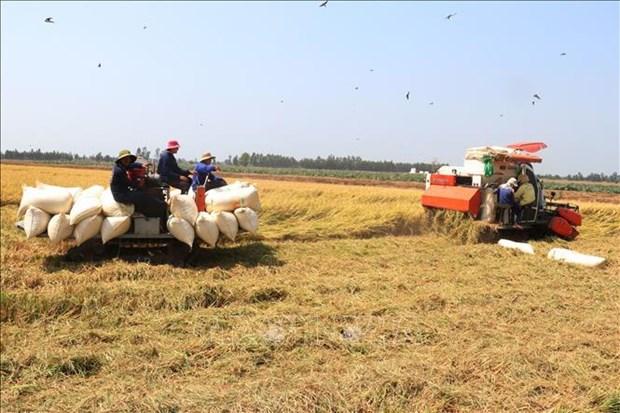Agilizan desarrollo sostenible de delta del Mekong asociado con adaptacion al cambio climatico hinh anh 2