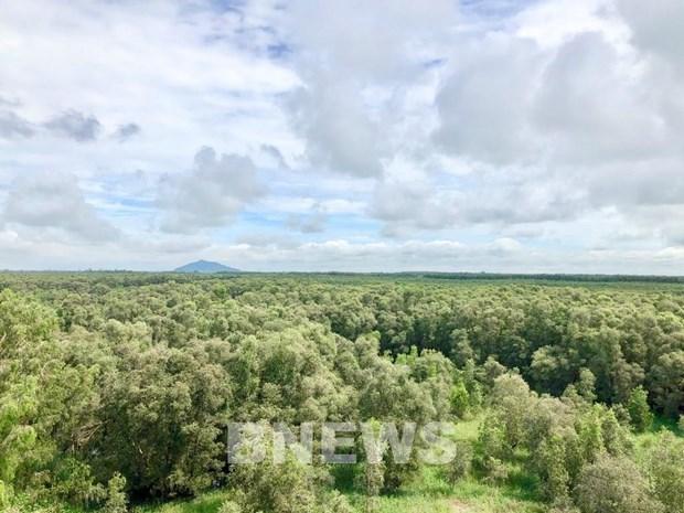 Servicios ambientales forestales de Vietnam generaran 121 millones de dolares en 2021 hinh anh 1