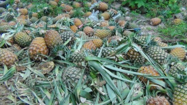 Tailandia apunta a lograr fondo multimillonario por exportaciones de alimentos hinh anh 1