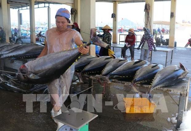 Crecen exportaciones de atun de Vietnam a UE gracias al EVFTA hinh anh 1
