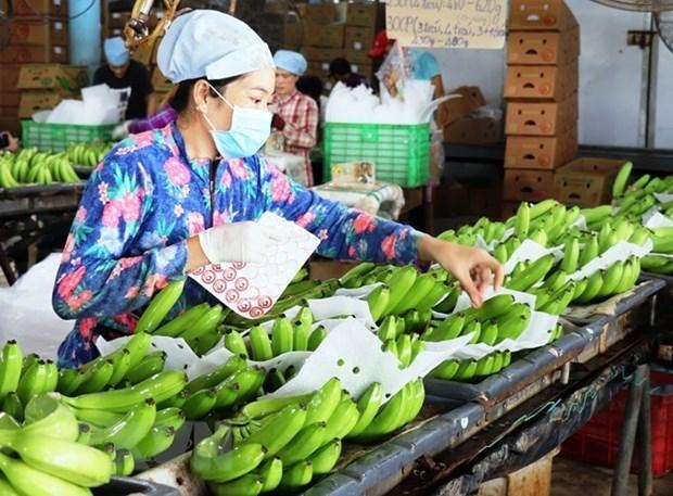 Exportadores de verduras y frutas vietnamitas deben explotar nicho de mercado de Europa del Norte hinh anh 1