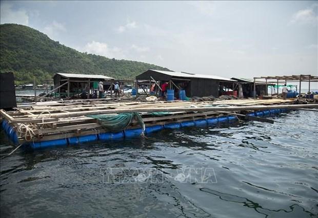 Provincia vietnamita de Kien Giang por impulsar cria de animales acuaticos hinh anh 1