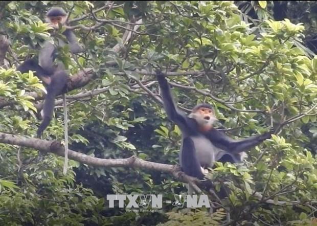 Provincia vietnamita por expandir el habitat de especie amenazada hinh anh 1