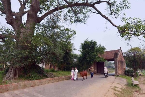 Duong Lam, primera aldea antigua vietnamita reconocida en reliquia nacional hinh anh 1