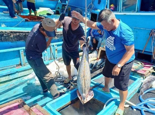 Provincia vietnamita refuerza lucha contra la pesca ilegal hinh anh 1