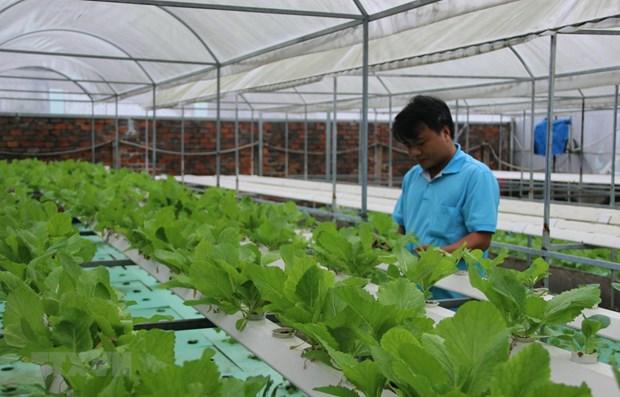 Ciudad Ho Chi Minh se convertira en 2030 en centro de tecnologia agricola de alta calidad hinh anh 1
