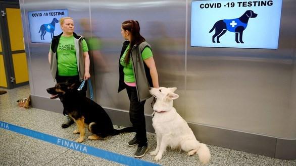 Tailandia entrena perros rastreadores para detectar el COVID-19 hinh anh 1
