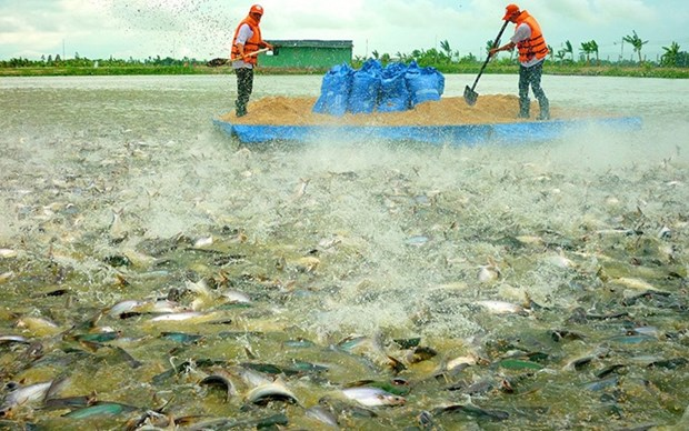 Draw fish exports from Vietnam to the UK increase hinh anh 1