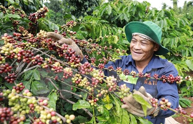 Altiplanicie Central de Vietnam, con grandes potencialidades de desarrollo hinh anh 1