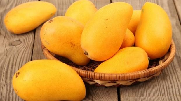 Aumenta precio del mango de Vietnam exportado a Estados Unidos hinh anh 1