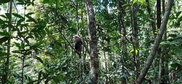 Provincia vietnamita de Binh Phuoc libera animales salvajes al entorno natural hinh anh 1