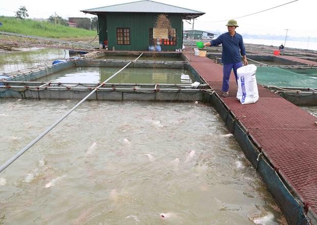 Provincia vietnamita de Long An promueve la acuicultura a gran escala hinh anh 1