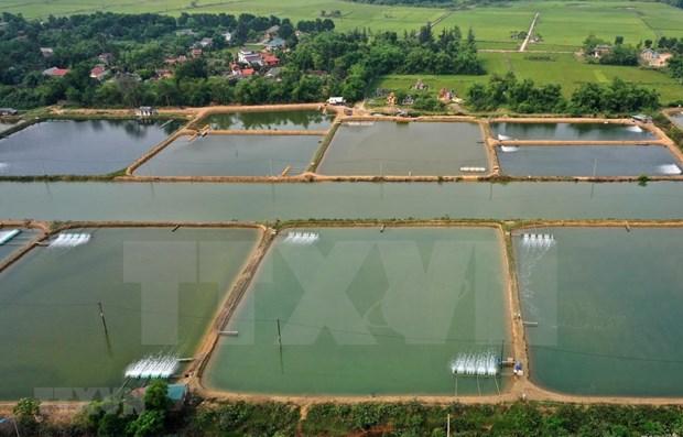 Provincia vietnamita de Long An promueve la acuicultura a gran escala hinh anh 2