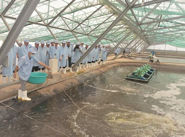 Bac Lieu apunta convertirse en centro de industria del camaron de Vietnam hinh anh 2