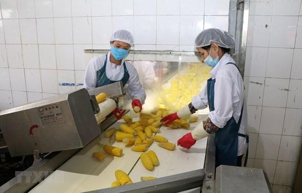 Valor de exportacion de productos agricolas de Vietnam aumenta casi 20 por ciento hinh anh 1