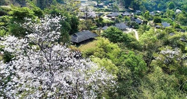 Belleza de region noroeste de Vietnam asombra a visitantes hinh anh 2