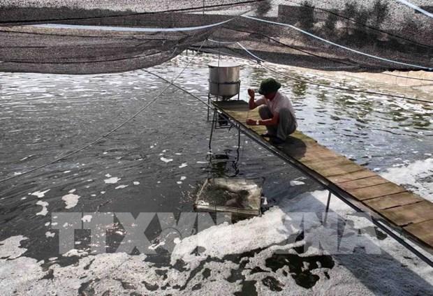 Provincia vietnamita de Bac Giang impulsa automatizacion en acuicultura intensiva hinh anh 1
