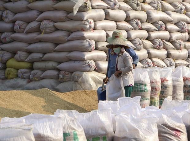 Aumentan exportaciones agrosilvicolas y acuicolas de Vietnam hinh anh 1