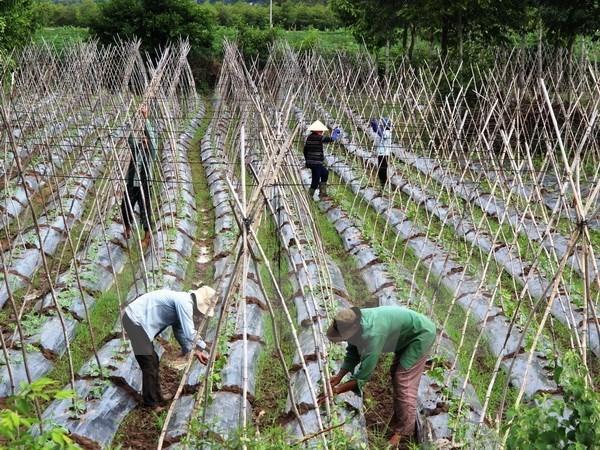 Estimulan en Vietnam desarrollo de economia colectiva y cooperativa hinh anh 1