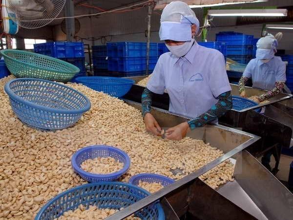 Empresas vietnamitas aumentan importaciones de anacardo crudo hinh anh 1