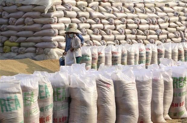 Vietnam conservara segundo puesto como exportador mundial de arroz hinh anh 1