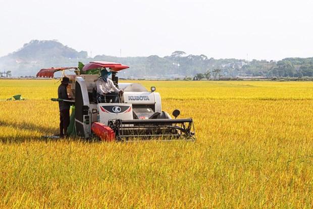 Mecanizacion beneficia a agricultores de la provincia vietnamita de Ba Ria - Vung Tau hinh anh 2