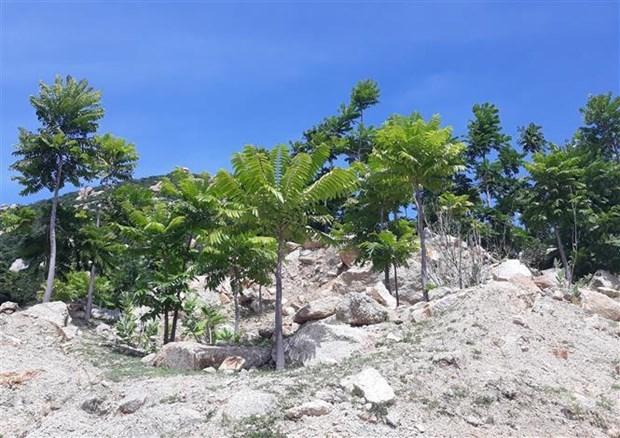 Nueva Zelanda apoya proyecto ambiental en provincia vietnamita de Ninh Thuan hinh anh 1