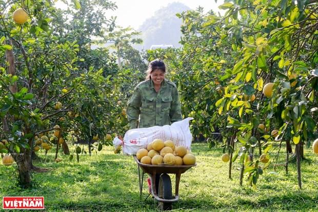 Hanoi realiza cinco tareas clave para garantizar la seguridad alimentaria hinh anh 1
