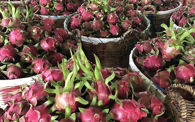 Exportaciones de verduras de Vietnam superan mil millones de dolares hinh anh 1