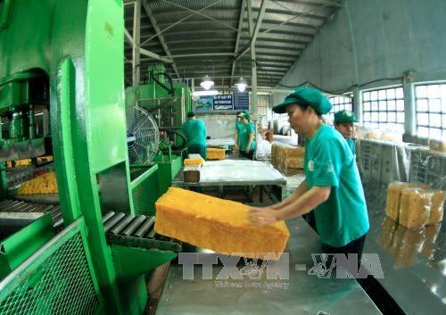 Vietnam registra fuerte aumento de exportacion de caucho hinh anh 1