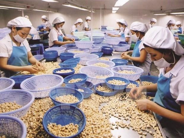 Turquia aumenta importaciones de anacardos de Vietnam hinh anh 1