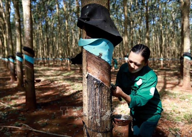 Fuerte incremento en exportaciones de caucho de Vietnam hinh anh 1