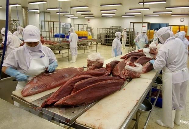 Fuerte incremento de exportaciones de atun de Vietnam hinh anh 1