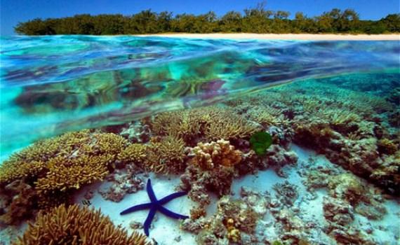 Vietnam promueve actividades en respuesta al Dia Mundial de los Oceanos 2021 hinh anh 1