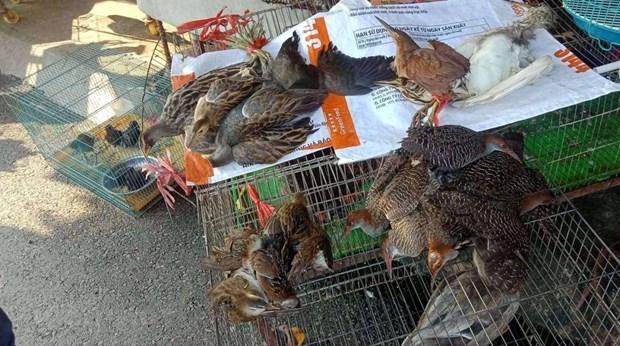 Vietnam por prevenir comercio ilegal de animales silvestres en medio del COVID-19 hinh anh 1