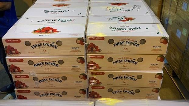 Envian casi 10 toneladas de lichi vietnamita a Japon por via aerea hinh anh 1