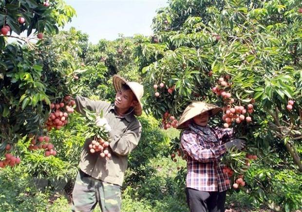 Efectuaran conferencia para impulsar exportacion de productos agricolas de Vietnam a Japon hinh anh 1