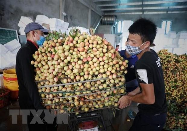 Premier vietnamita insta a respaldar comercializacion de productos agricolas de Bac Giang hinh anh 1
